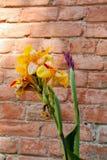 Belles fleurs d'iris en nature images stock