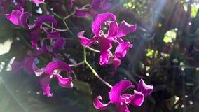 Belles fleurs d'orchidée sous la lumière du soleil banque de vidéos
