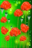 Belles fleurs d'un pavot image stock
