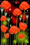 Belles fleurs d'un pavot photographie stock libre de droits