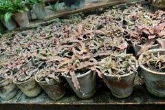 Belles fleurs dans des pots photographie stock libre de droits