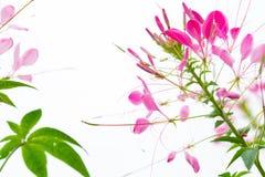 Belles fleurs dans extérieur images libres de droits