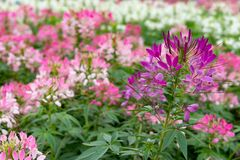 Belles fleurs dans extérieur photo libre de droits