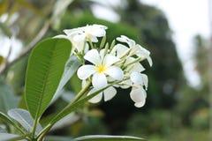 Belles fleurs dans le jardin photographie stock