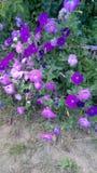 Belles fleurs dans le pays Images libres de droits