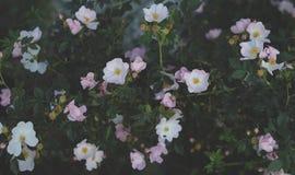 Belles fleurs dans un domaine photographie stock