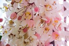 Belles fleurs de bakeriana Craib de casse ou d'arbre de douche rose en Thaïlande Image stock