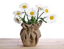 Belles fleurs de camomille dans le pot de fleurs Image libre de droits