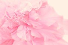 Belles fleurs de couleur douce Images libres de droits