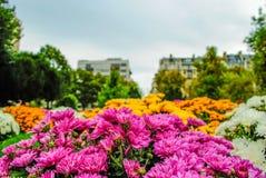 Belles fleurs de fleurs à un jardin parisien Image libre de droits