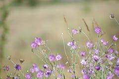 Belles fleurs de floraison Images libres de droits