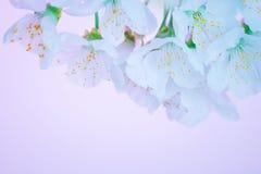 Belles fleurs de floraison de source Images libres de droits
