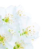 Belles fleurs de floraison de source Photographie stock
