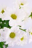 belles fleurs de fond blanches Image stock