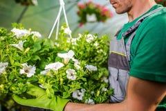Belles fleurs de jardin Photo stock