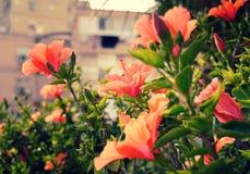Belles fleurs de la vie Image stock