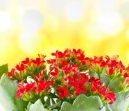 Belles fleurs de macro source. photographie stock libre de droits