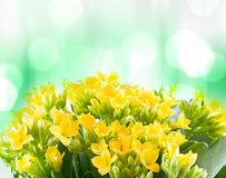 Belles fleurs de macro source. photo stock