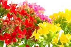 Belles fleurs de macro source. images libres de droits