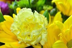 Belles fleurs de marguerite en été Images libres de droits
