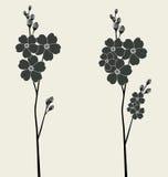 Belles fleurs de myosotis des marais Image libre de droits