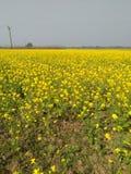 Belles fleurs de nature Photographie stock libre de droits