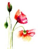 Belles fleurs de pavot Photographie stock