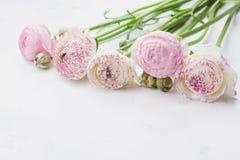 Belles fleurs de ranunculus sur la table en pierre blanche Frontière florale dans la couleur en pastel Carte de voeux pour des mè Photo libre de droits