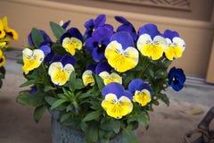 Belles fleurs de ressort au Japon Photo stock