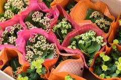 Belles fleurs de ressort dans dimanche Photos libres de droits