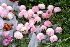 Belles fleurs de ressort dans dimanche Photo stock