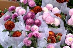 Belles fleurs de ressort dans dimanche Images libres de droits