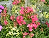Belles fleurs de ressort dans dimanche Image stock