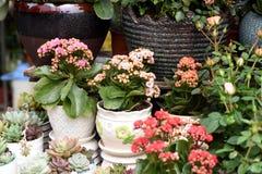 Belles fleurs de ressort dans dimanche Photos stock
