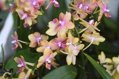 Belles fleurs de ressort dans dimanche Images stock