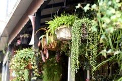 Belles fleurs de ressort dans le pot de fleurs Photographie stock libre de droits