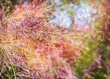 Belles fleurs de rose d'arbre d'été Photos libres de droits
