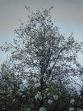 Belles fleurs de souhait d'arbre images libres de droits