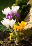 Belles fleurs de source Images libres de droits
