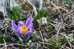 Belles fleurs de source Photo libre de droits