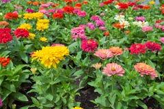 Belles fleurs de source Photographie stock libre de droits