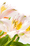 Belles fleurs de source. photographie stock