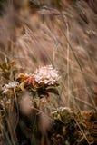 Belles fleurs de wight image stock