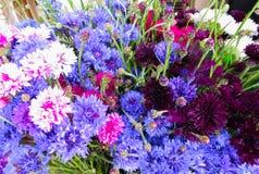 Belles fleurs des bleuets dans un bouquet énorme photos libres de droits