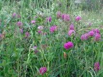 Belles fleurs en été de champ Photographie stock