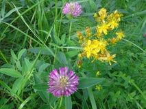 Belles fleurs en été de champ Images stock