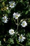 Belles fleurs en nature photographie stock libre de droits