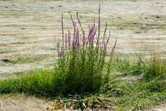 Belles fleurs en nature photos libres de droits