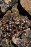 Belles fleurs en nature images stock