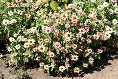 Belles fleurs en nature image libre de droits